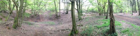 Hodgemoor Wood today