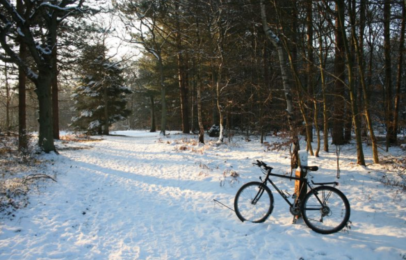 Snowy Hodgemoor Wood, February 2012