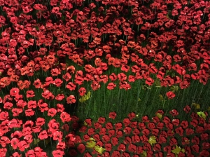 Poppies in the moat, Tower of London